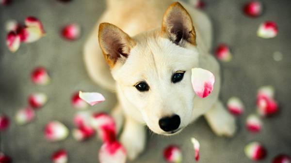 柴犬 画像