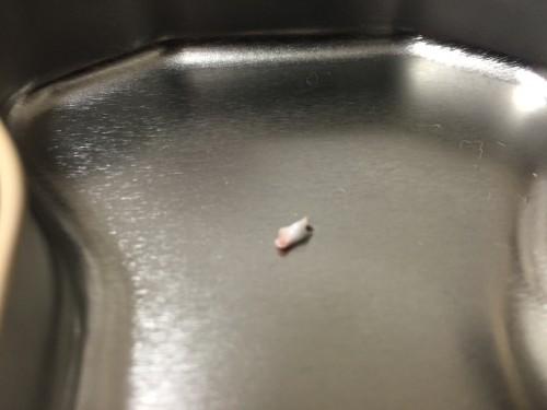 柴犬 赤tyん 歯