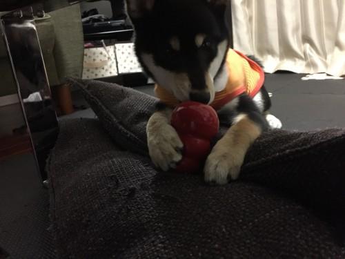 犬 おもちゃ コング