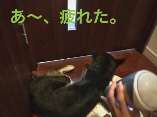 犬 シャンプー