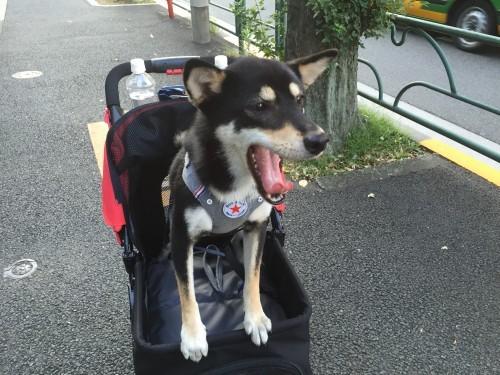 犬 バギー