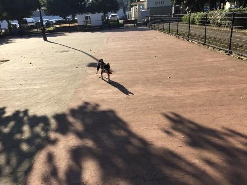 駒沢公園 ドッグラン