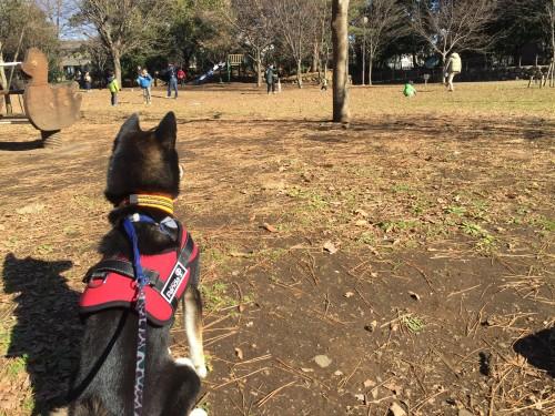 公園 和來