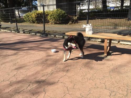 駒沢公園 和來