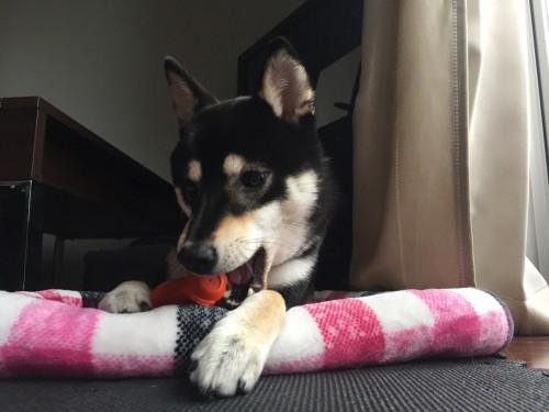 犬 おもちゃ