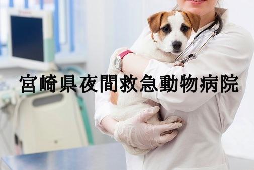 宮崎県 夜間動物病院