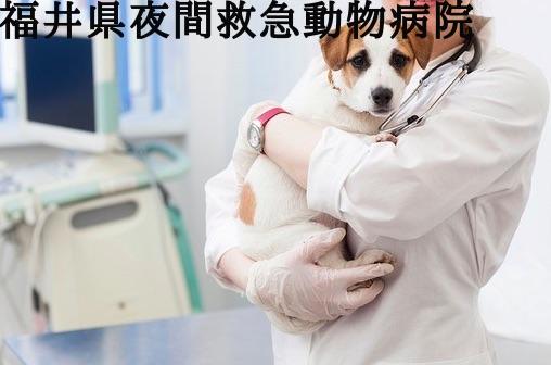福井 動物病院