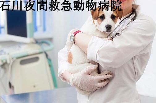 石川 夜間動物病院